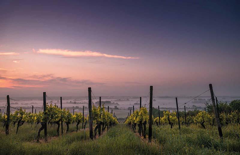 Le congrès Winery
